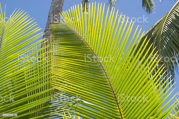 Palms Stock Photo - Download Image Now