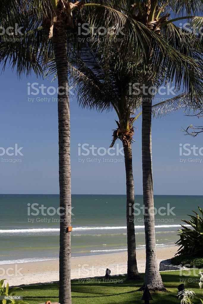 Palmi foto stock royalty-free