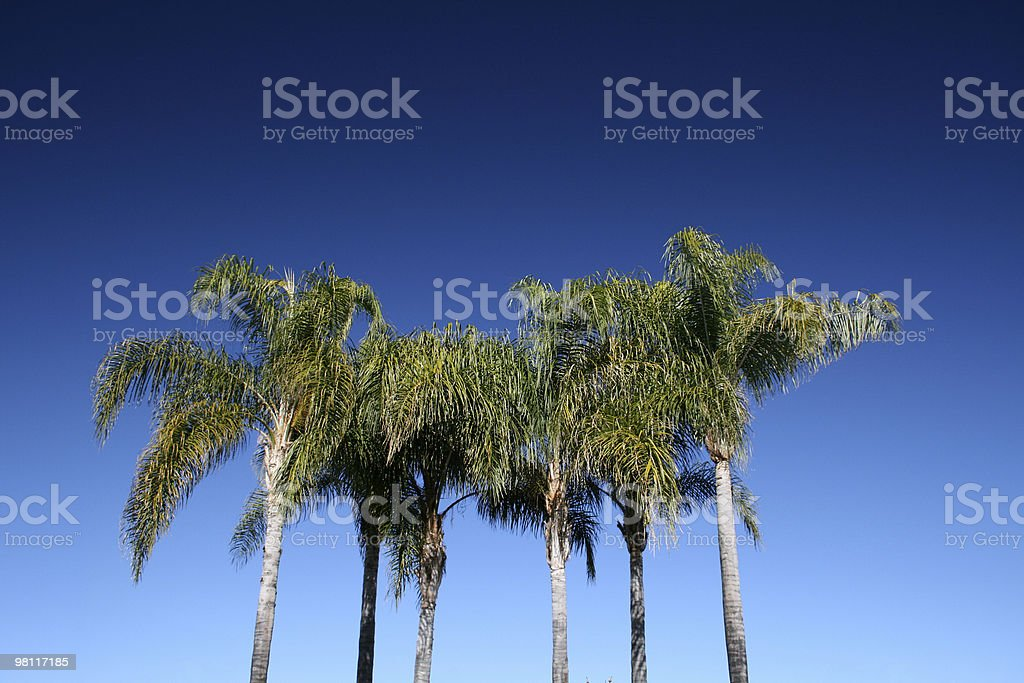 Palms Polarized royalty-free stock photo