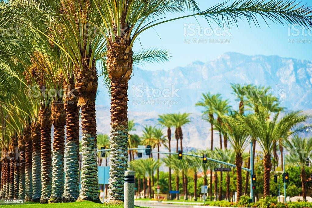 Palms Road Coachella Valley stock photo