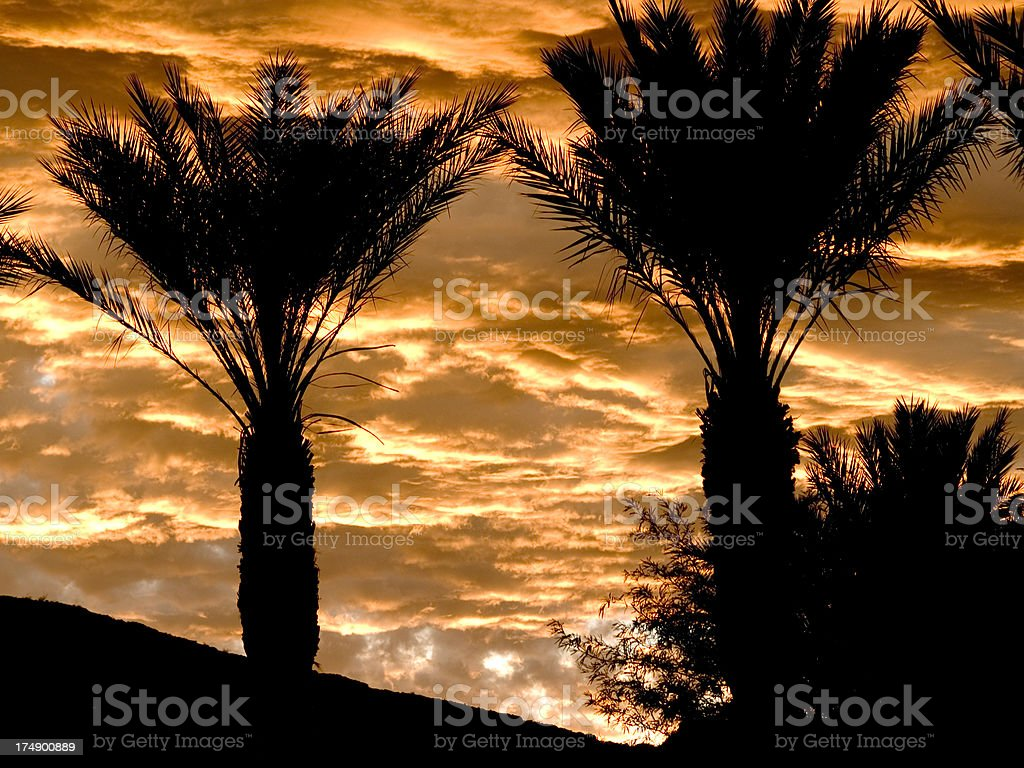 Palms Sillouette royalty-free stock photo