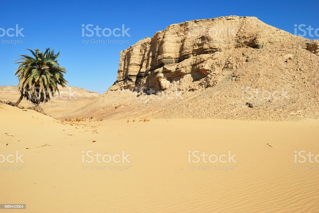 Palm's tree in the desert stock photo