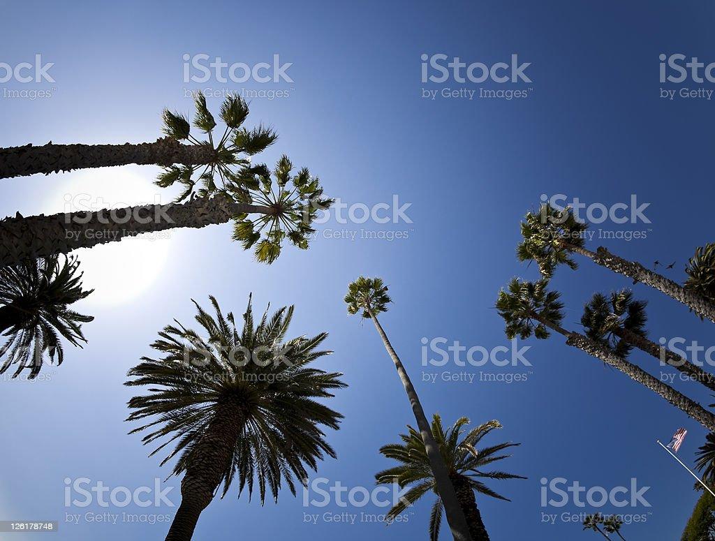 Palms árvores contra o céu azul vivo - foto de acervo