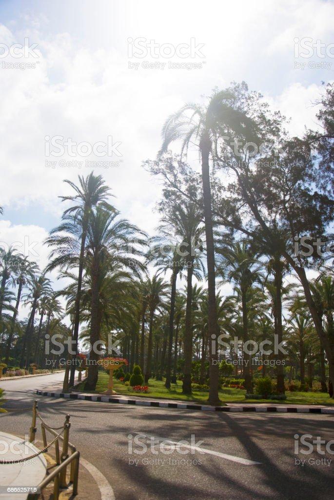 Palms trees near the road in the summer royaltyfri bildbanksbilder