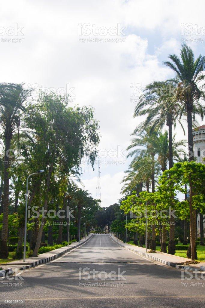 Palms trees near the road in the summer zbiór zdjęć royalty-free
