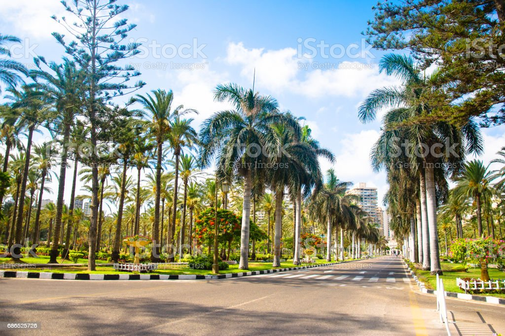 Palms trees near the road in the summer royalty free stockfoto