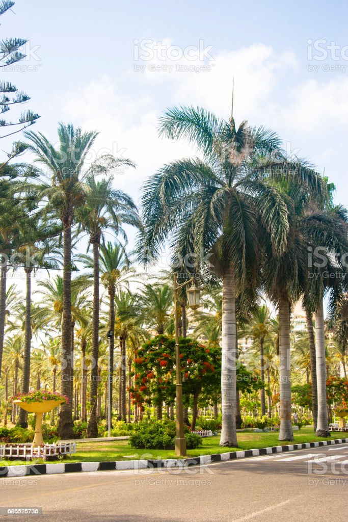 Palms trees near the road in the summer foto stock royalty-free