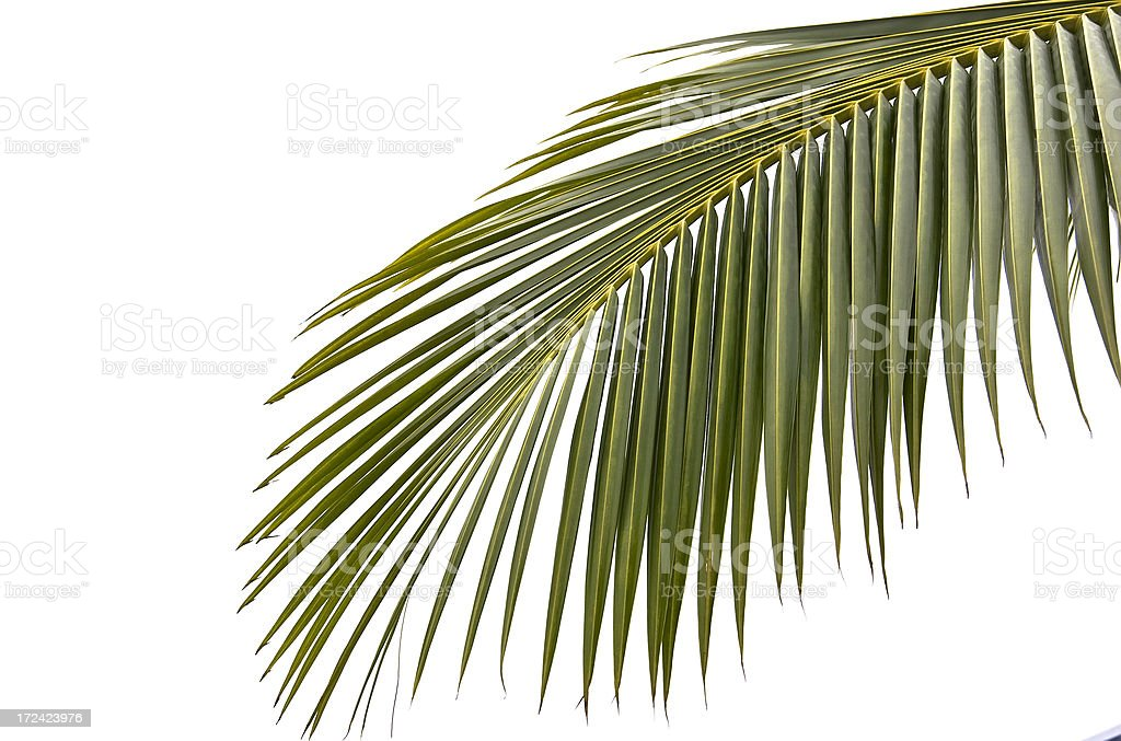 Palmtree Leaf royalty-free stock photo