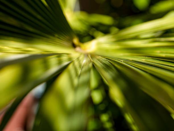 Palmbau-Blätter – Foto