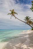istock palmtree, maldives 1263836714