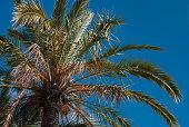istock Palmtree on balearic island Majorca 1289103436