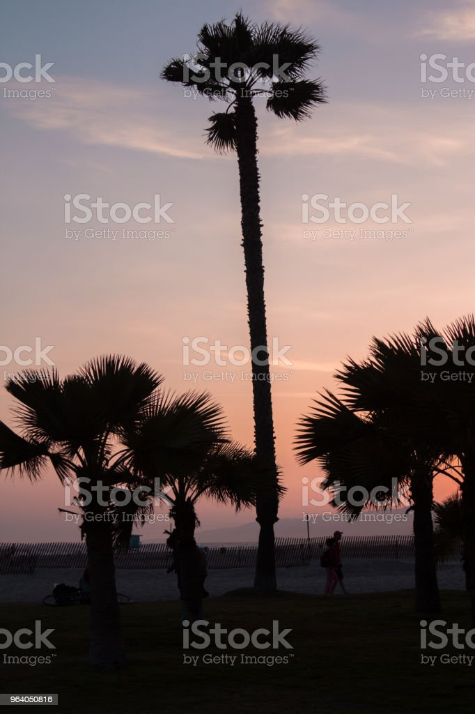 Palmtree - Royalty-free Backgrounds Stock Photo