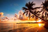 熱帯のビーチ、ドミニカ共和国にパームツリー シルエット