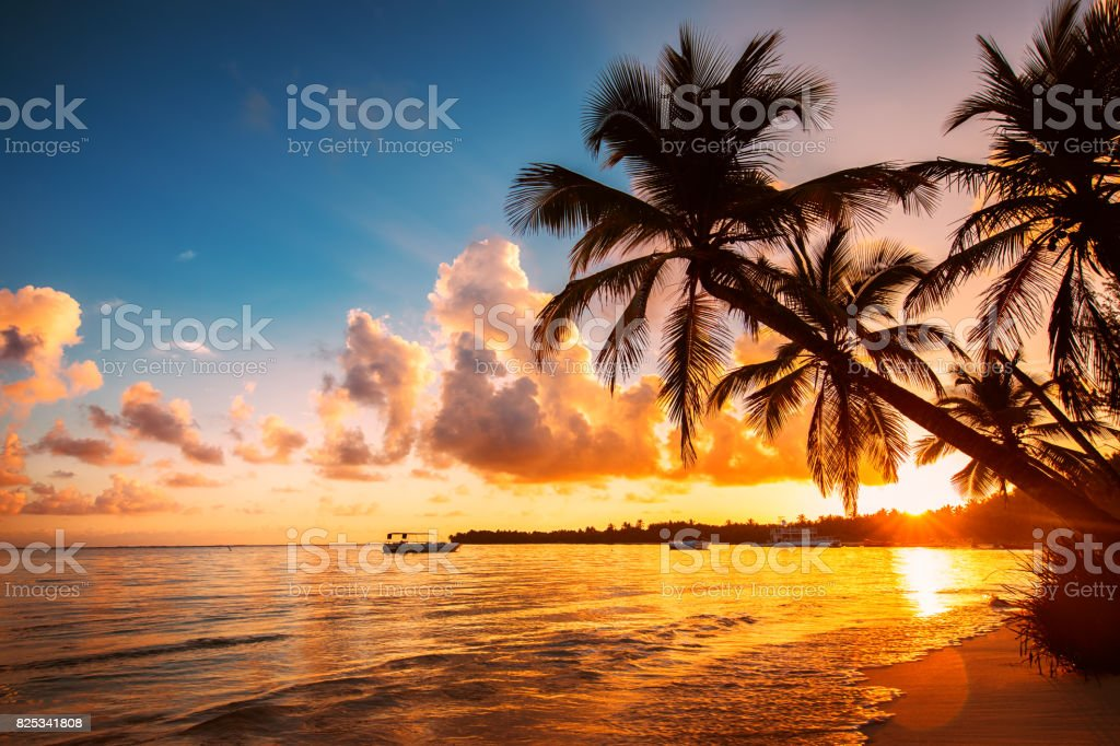 Palmtree silhouettes on the tropical beach, Dominican Republic stock photo