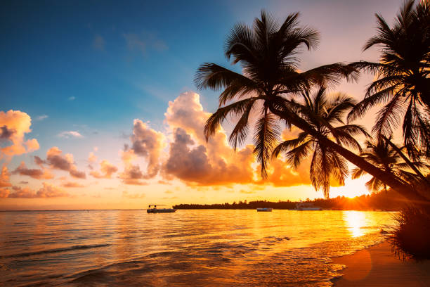 Palmtree silhouettes on the tropical beach, Dominican Republic - foto stock