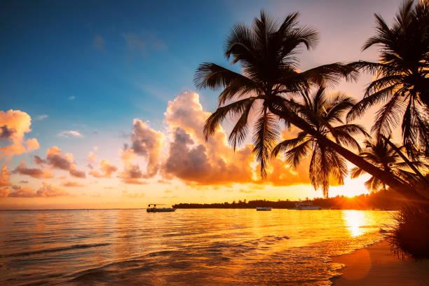 palme-silhouetten am tropischen strand, dominikanische republik - sonnenuntergang stock-fotos und bilder