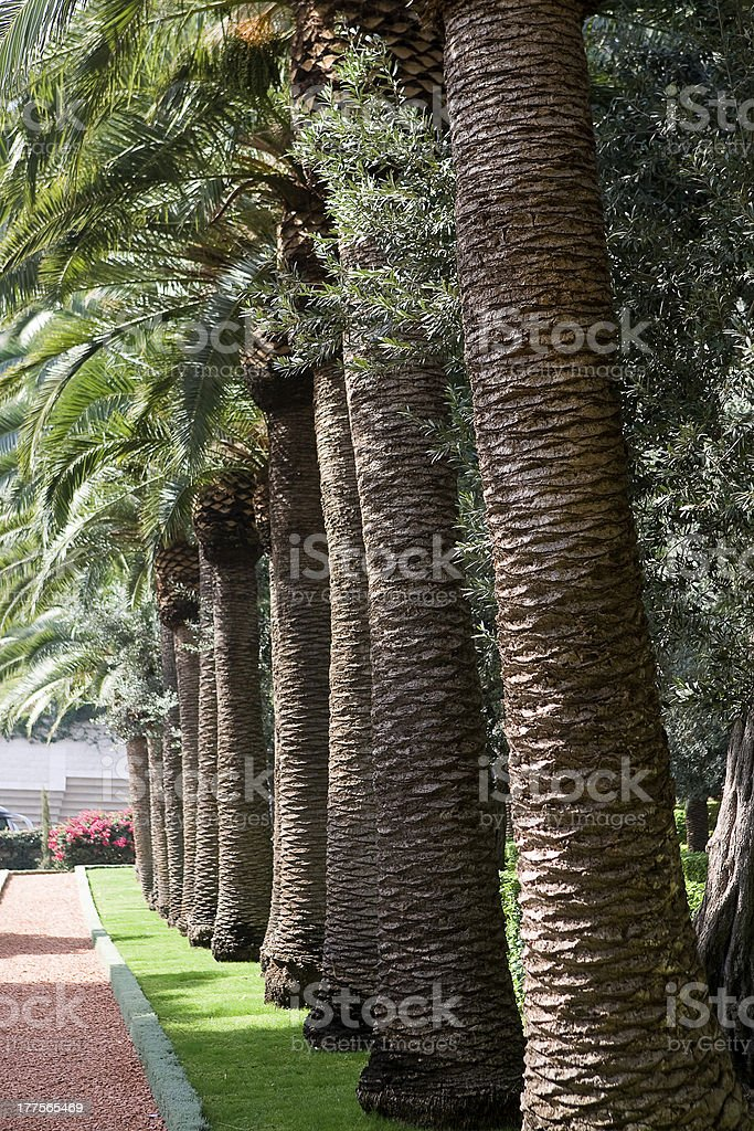 Palm-trees royalty-free stock photo