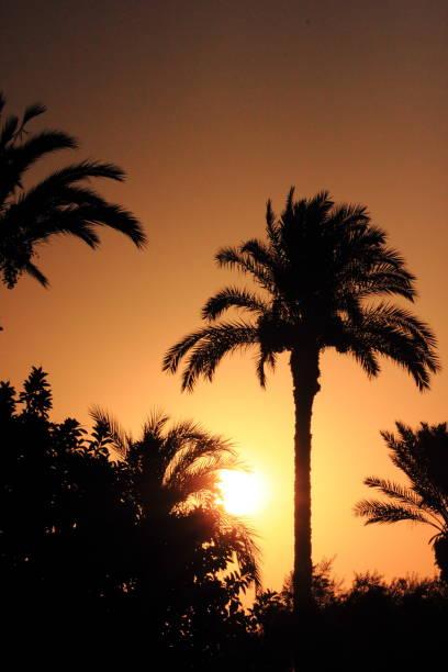 Palmen-Sonnenuntergang am Strand – Foto
