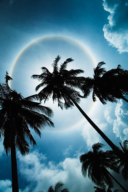 Palmtrees with 20 degree Halo stock photo