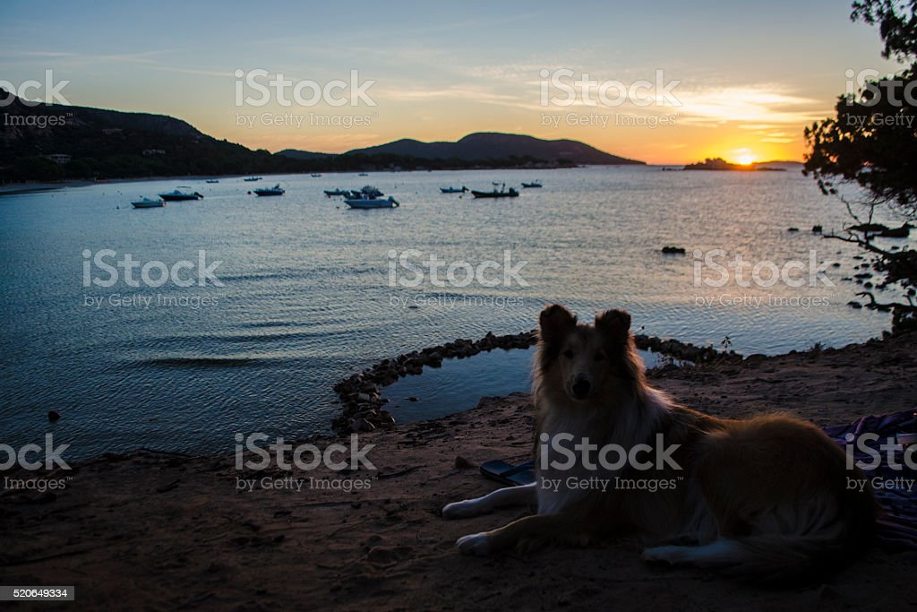 Plage de Palombaggia Sunset with Colette stock photo