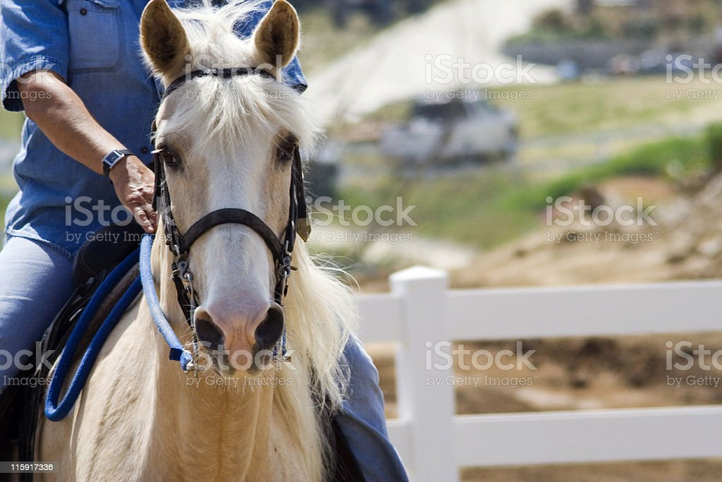Palomino Horse With Rider Stock Photo Download Image Now Istock
