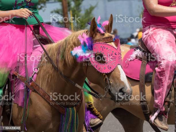 Palomino horses riders costumes sportsmans holiday parade sweet home picture id1164439045?b=1&k=6&m=1164439045&s=612x612&h=q8juqzhlpvkci5ybenvvyqqxc9fv12etyhakrfvrjgy=