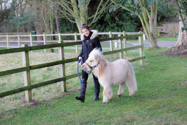 palomino miniature shetland pony white mane with russian outdoor girl - whiteway pony stock photos and pictures