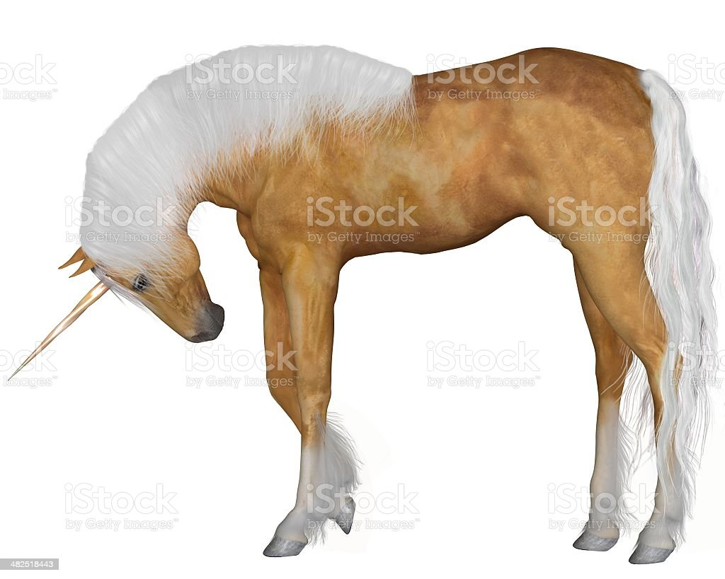 Palomino Unicorn - Head Down stock photo