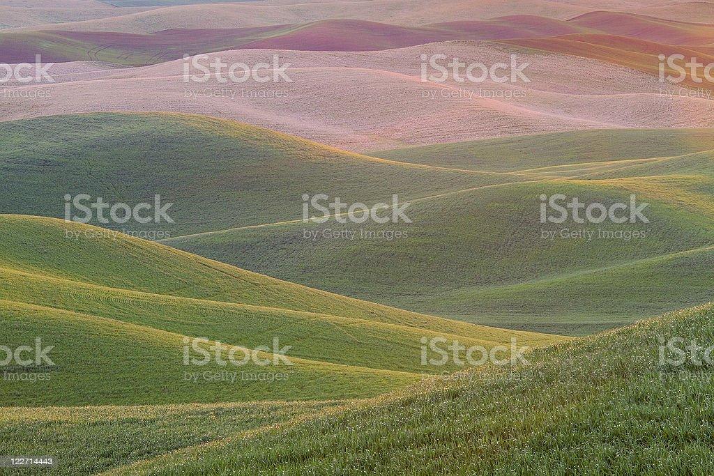 Palouse Hills stock photo