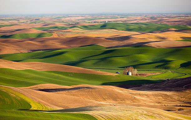 Palouse región de Steptoe Butte Tierras de labrantío colinas de Agricultura. - foto de stock