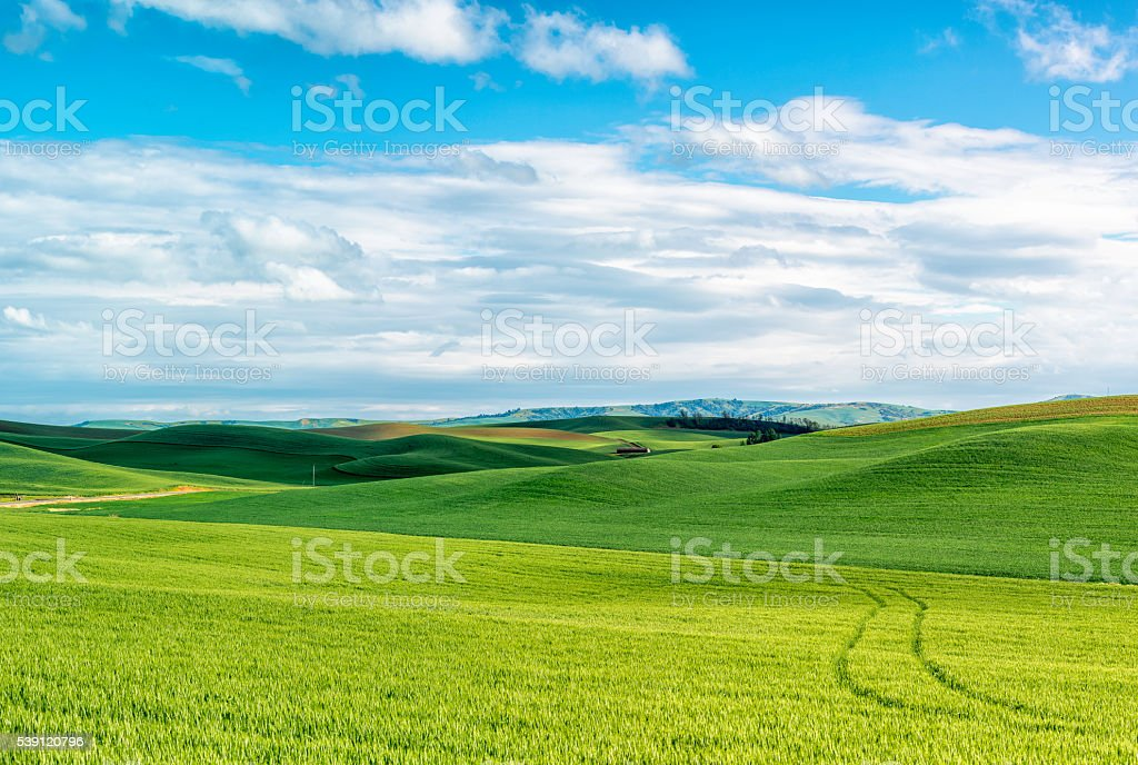 Palouse Rolling Hills (wheat) stock photo