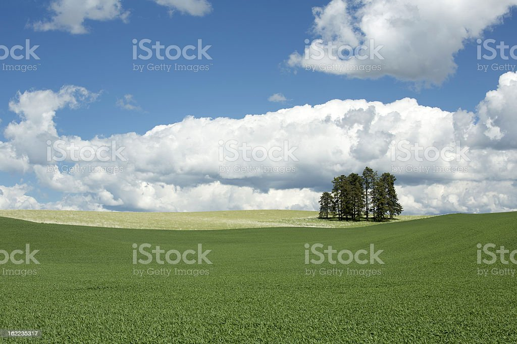 Palouse Trees in a Field royalty-free stock photo