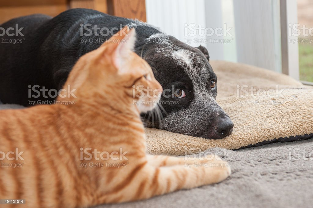 Pals hanging together stock photo