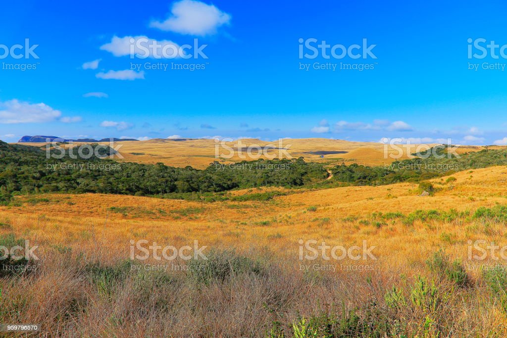 Pampa Meadows at sunrise, Southern Brazil landscape border with Argentina stock photo
