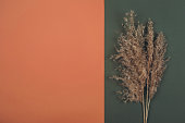 Top view of Pampas dry grass over terracotta red and green background with copy space. Earth trendy  colours concept.