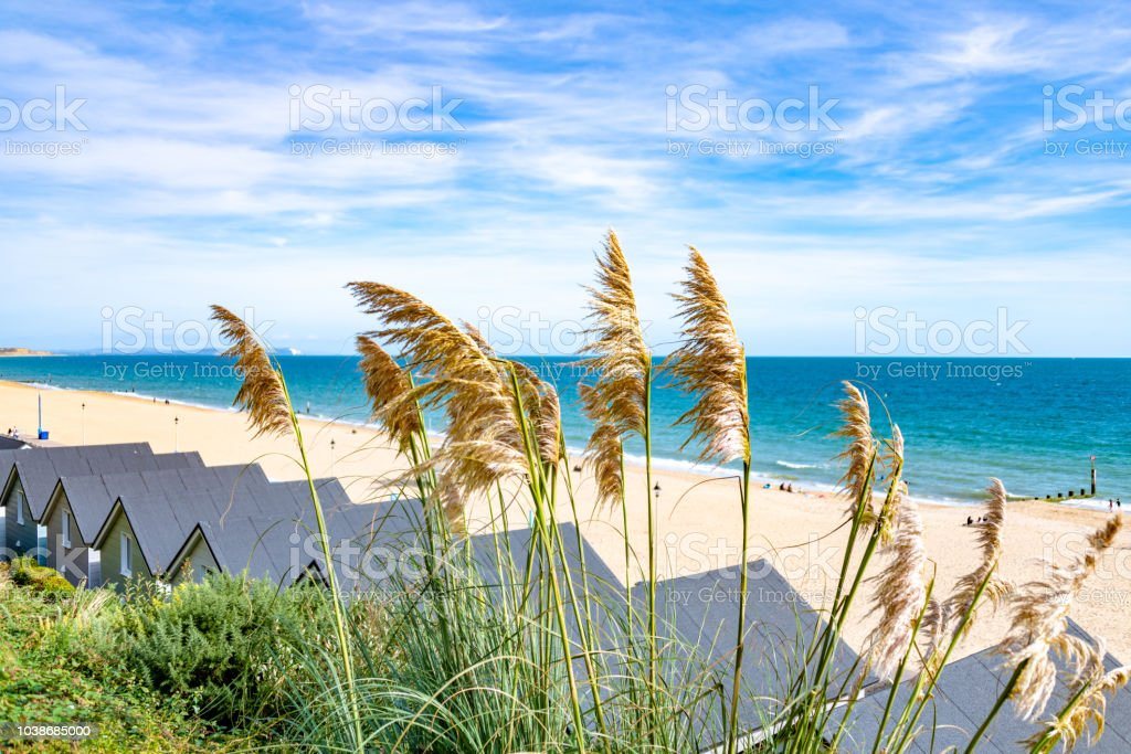 Pampas grass and beach huts on Bournemouth beach stock photo