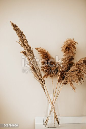 Pampas Grass and indoor Decor Concept