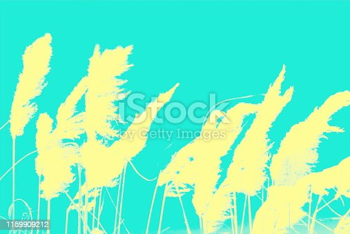 Pampas Grass Nature Background in a Minimalist Monochrome or Duotone Look for a Modern Style.