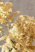 pampas grass neutral beige color background close up. Plant texture. Poster. Scandinavian minimalistic  home design.