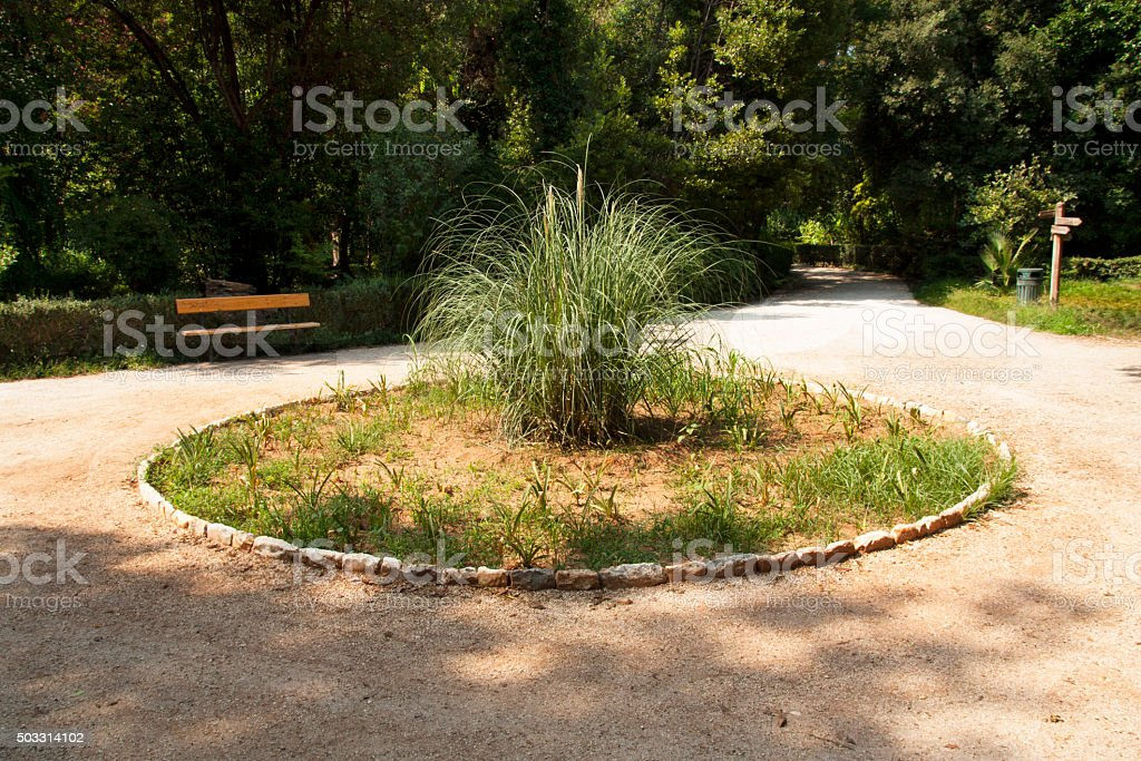 Pampas grass on flowerbed photo in Athens, Greece stock photo