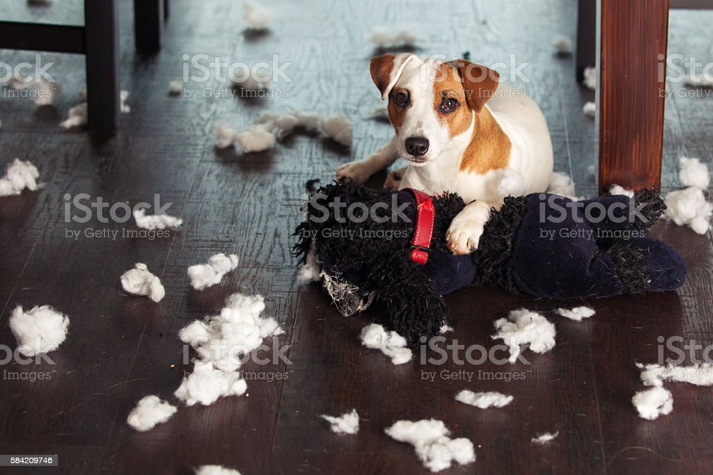 Pampering dogs stock photo