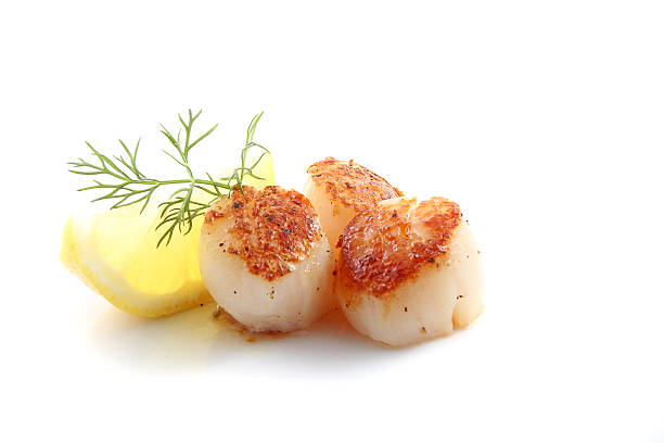 Pan seared scallops over white background. Pan seared scallops with dill and lemon isolated over a white background. mollusk stock pictures, royalty-free photos & images