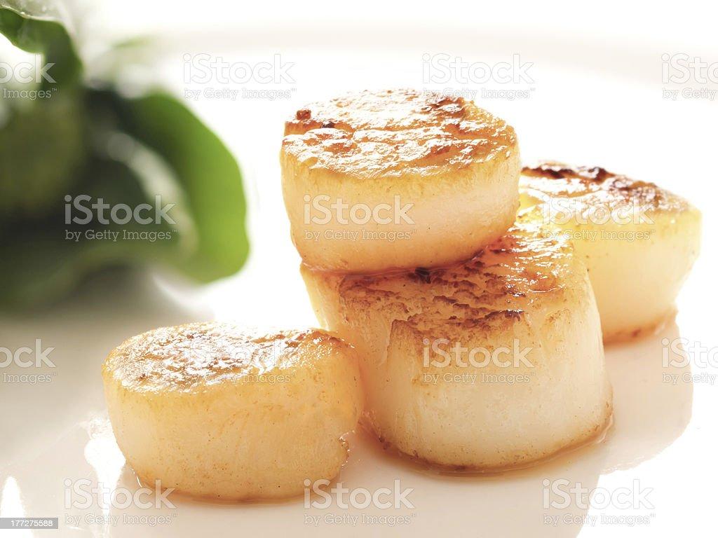 pan seared sea scallops stock photo