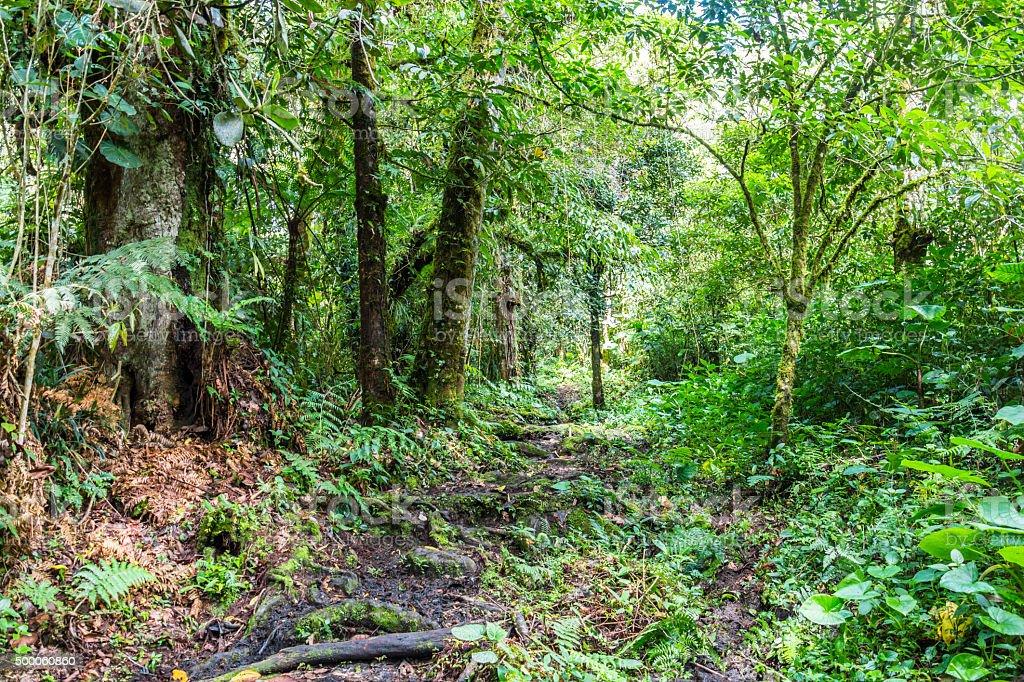 Panama jungle on Quetzal Trail stock photo
