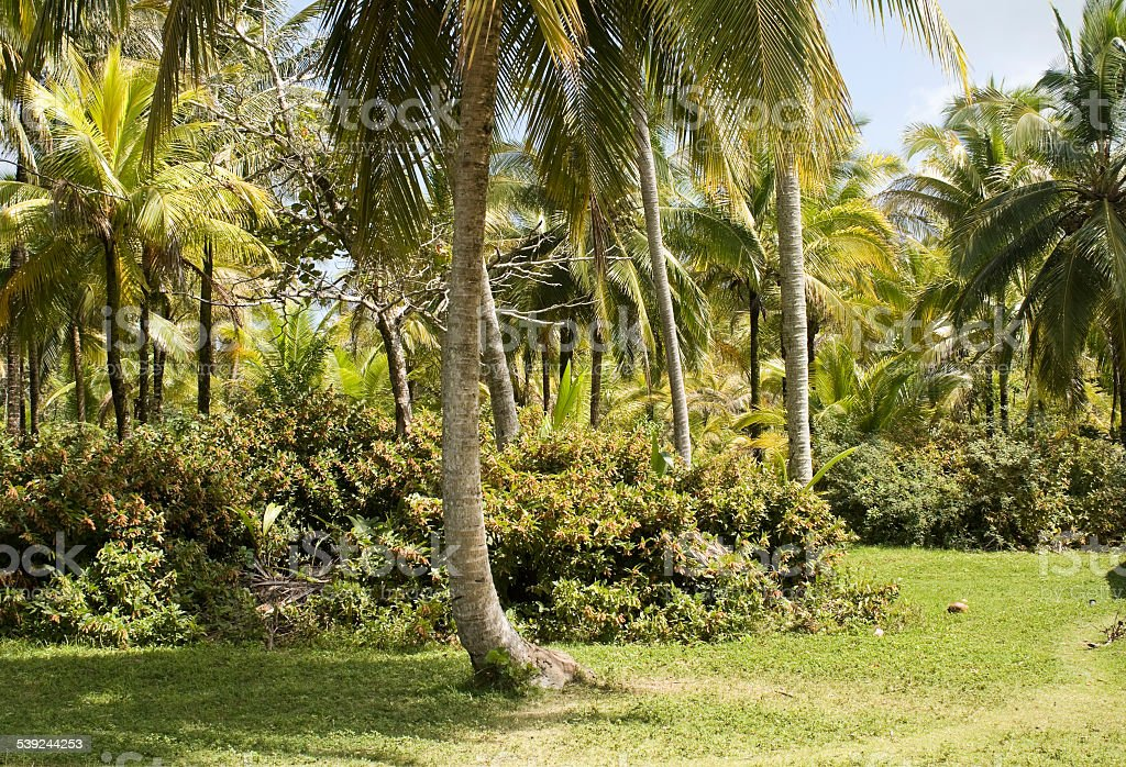 Panamanian jungle royalty-free stock photo