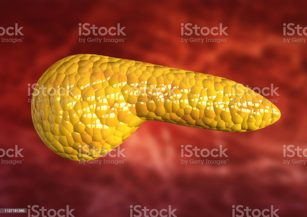 pancreas, human body organ isolated on scientific background. 3D rendering stock photo
