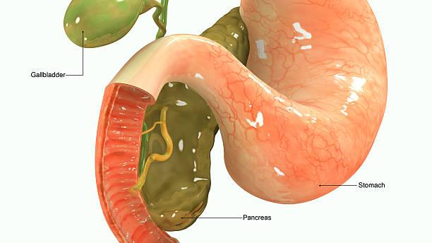 pâncreas - vesicula biliar - fotografias e filmes do acervo