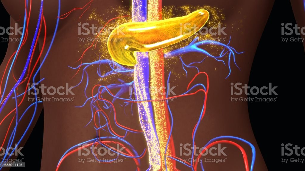Pancreas secreting insulin stock photo