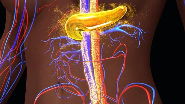 Pancreas secreting insulin - Photo