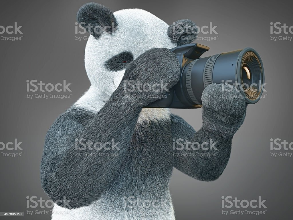 panda animail character photographer camera takes picture isolated background illustration stock photo